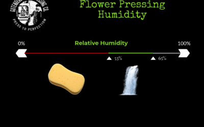 Flower Rosin Pressing Humidity